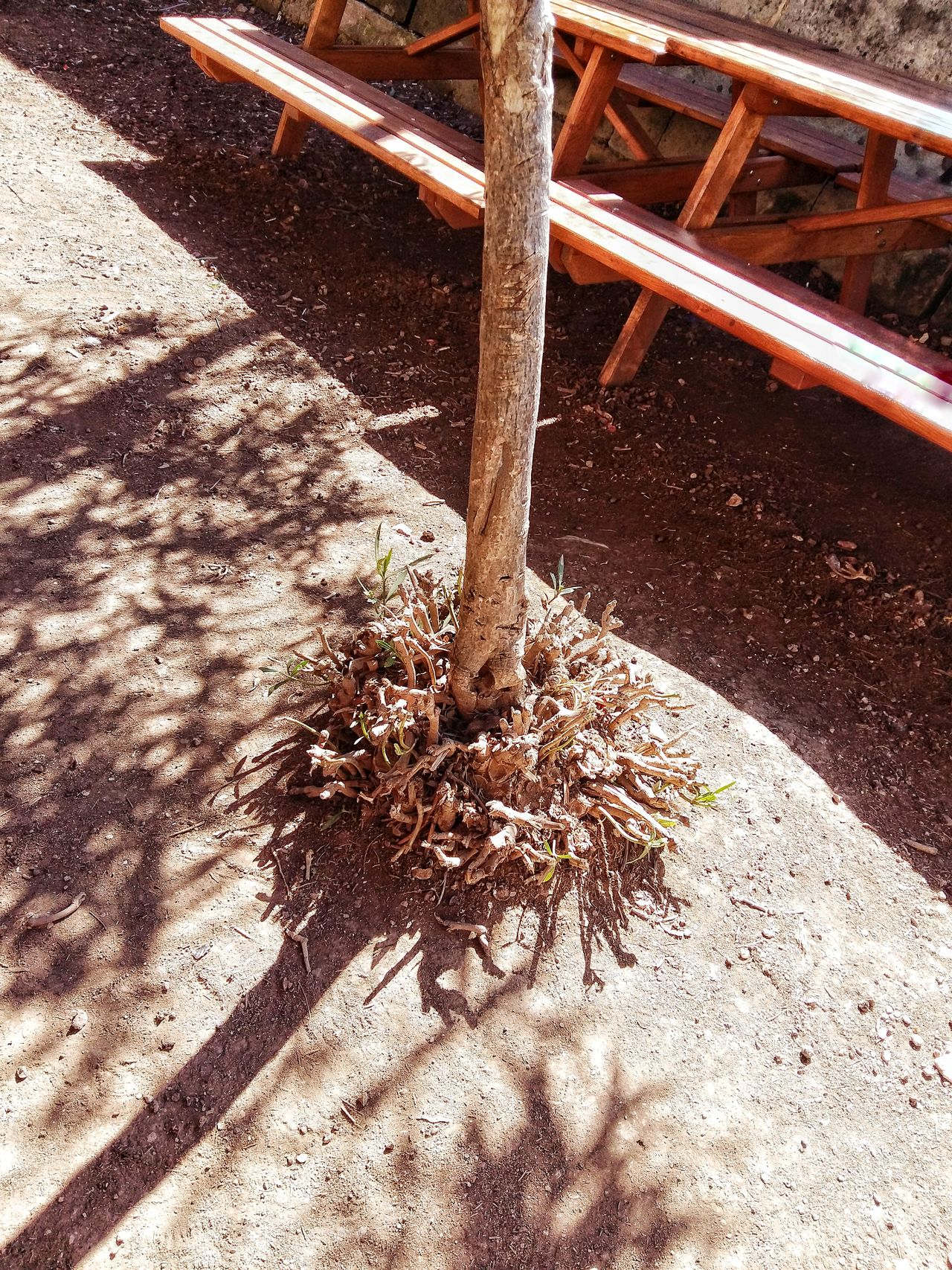 A nature Sunlight Shadow Close-up Outdoors No People Day Nature Tree Thing Idontknow EyeEmNewHere Malta Junior College Msida Ground Dirt Shrubbery Bush Thrusday New First10 POTD Sunny Hot Day Summer