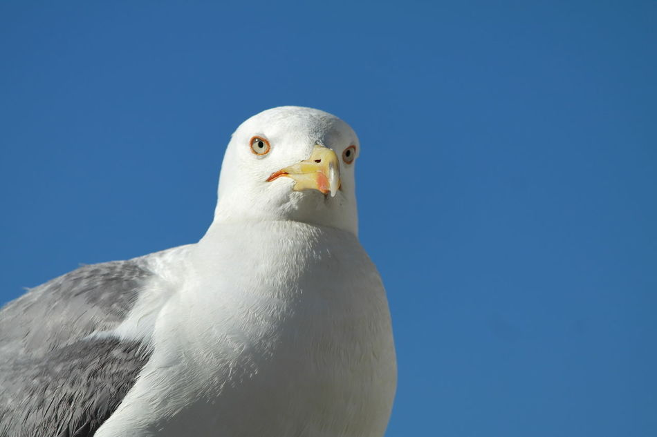 Beautiful stock photos of gitarre, blue, bird, one animal, low angle view
