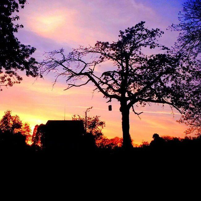 Throughback Travel Konstanz Bodensee Kreuzlingen LastDay Sunset Burningsky Fire Purple Orange Birdtable Village Wild Nature Siluet