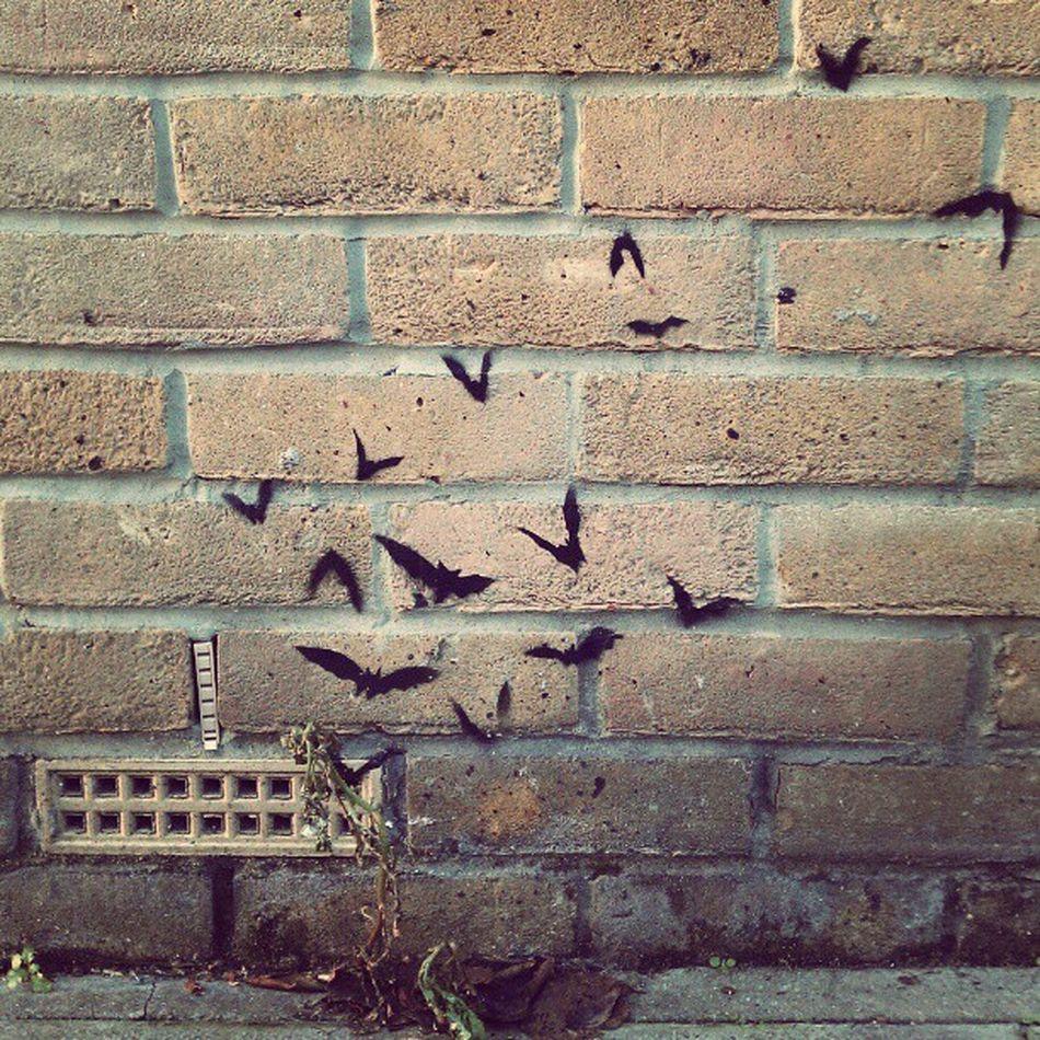 Streetart found on Columbiaroad London Bats Graffiti