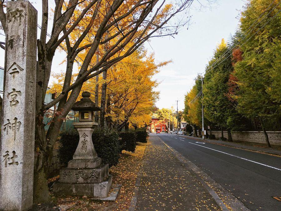 今宮神社 今宮門前通り 京都 Kyoto Autumn Leaves Autumn Autumn Colors Kyoto, Japan Hello World Kyototrip Kyoto Autumn Relaxing
