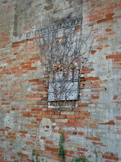 Backgrounds Full Frame Built Structure Textured  Building Exterior No People Architecture Weathered Outdoors Spray Paint Day Close-up Wall Textures Wall Old Countryside Italy Italianeography Details Romagna Landscape Eye Brick Wall Bricks Brickstone Building