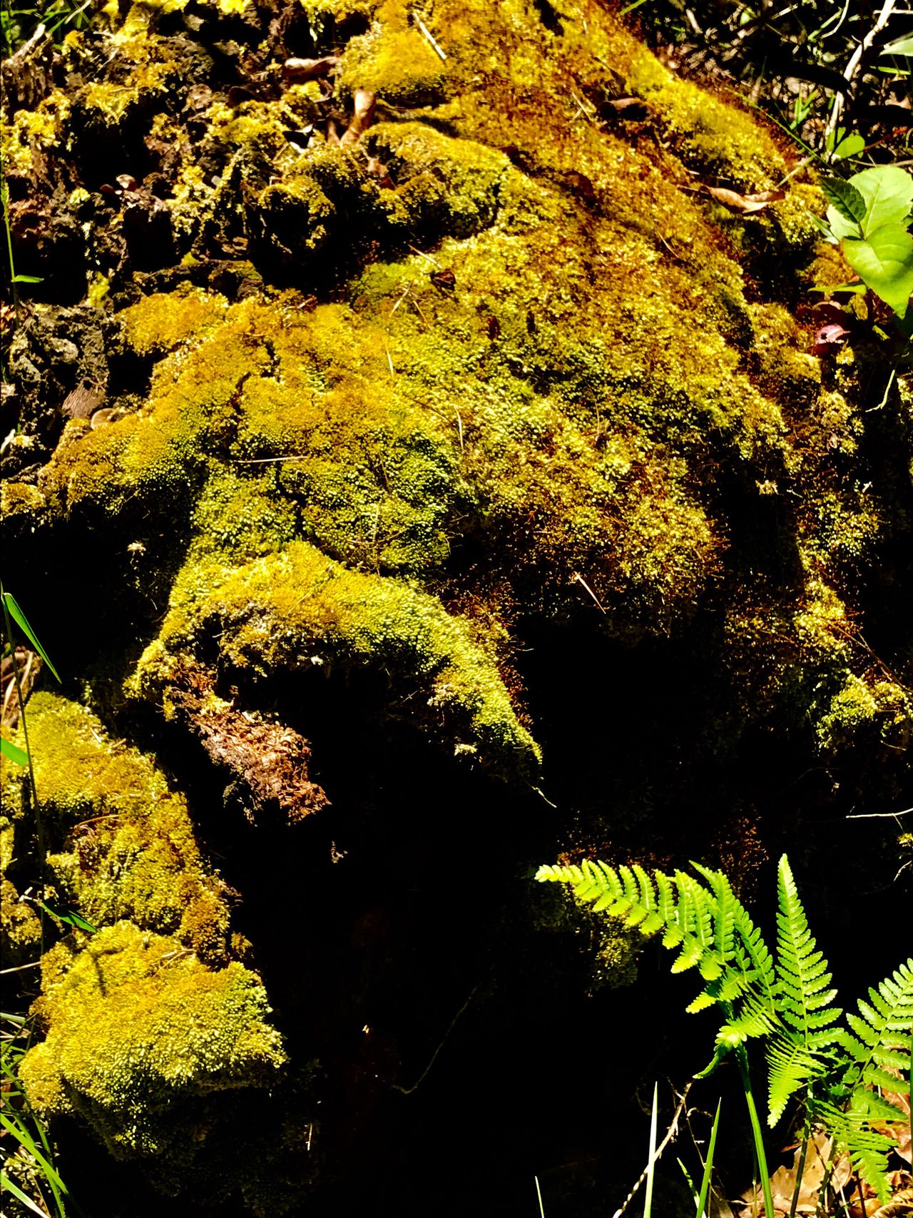 Close-up Moss Beauty In Nature Day Outdoors No People Waterfront Pattern Lights And Shadows Focus On Foreground Multi Colored Sunlight City Illuminated No Filter, No Edit, Just Photography