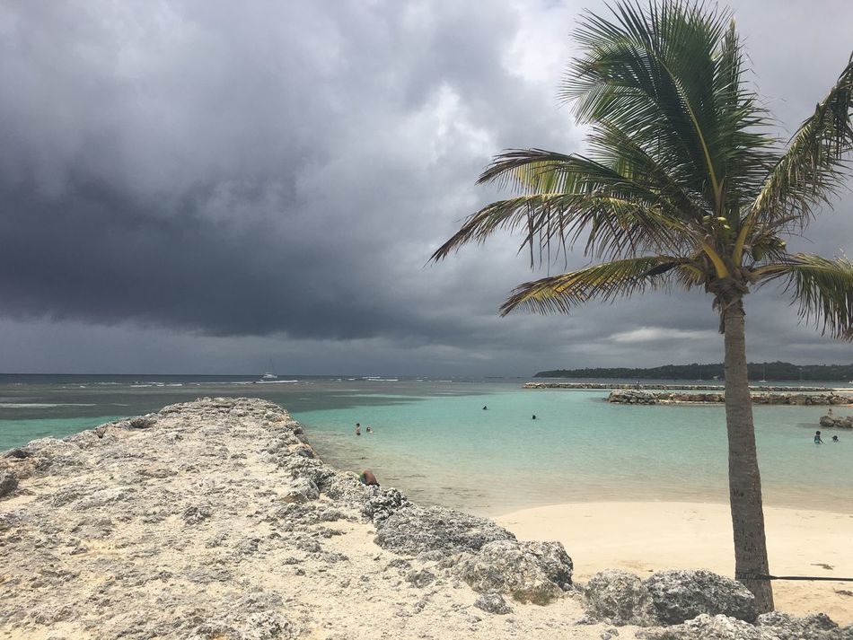 Sun or not ! Sea Beach Palm Tree Water Beauty In Nature Scenics Tranquility Horizon Over Water Tranquil Scene Nature Sand Sky Idyllic Tree Cloud - Sky Day Outdoors No People