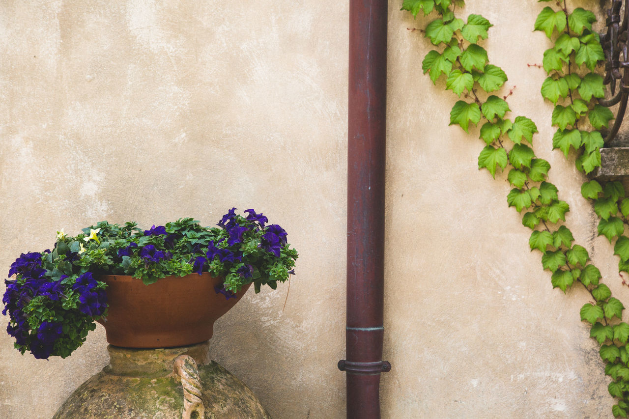 Amalfi Coast Architecture Built Structure Close-up Day Detail Flower Fragility Freshness Growth Italy Leaf Moody Nature No People Outdoors Plant Plant Plants Potted Plant Rustic Street Wall Wall - Building Feature Window Box