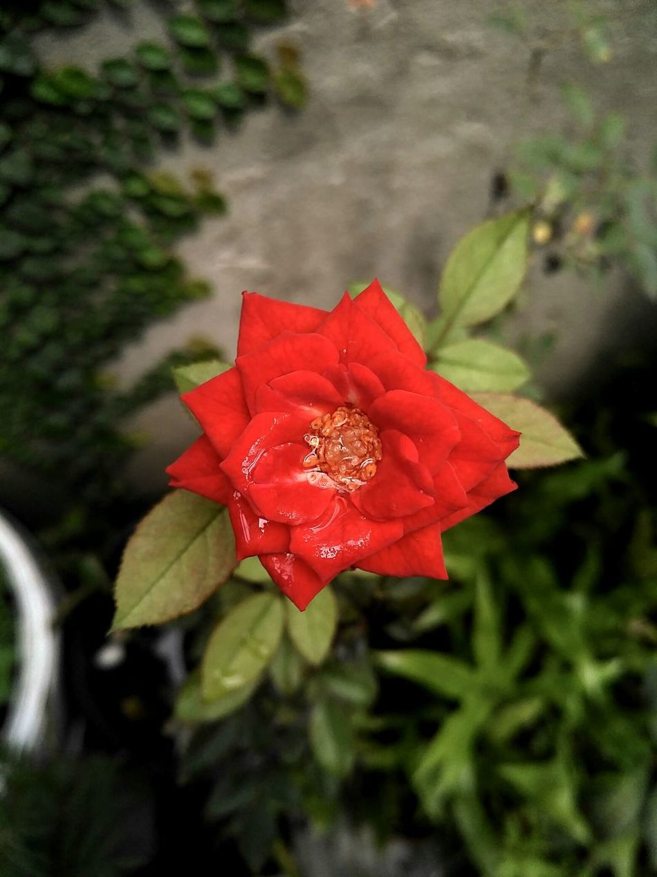 Red Nature Flower Plant Growth Beauty In Nature Leaf Outdoors No People Fragility Close-up Day Flower Head Water Blooming Trees And Sky Green Color Plant Growth Freshness Petal Red Beauty In Nature Nature Cloud - Sky