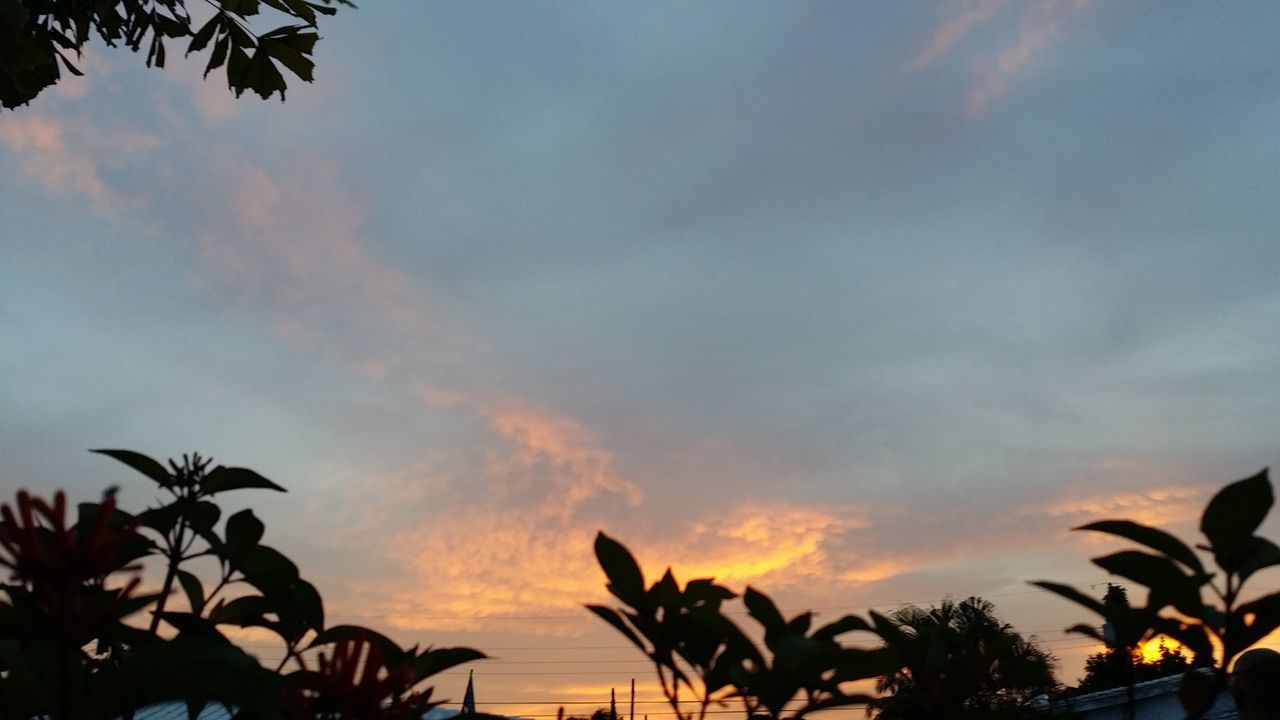 sky, sunset, nature, silhouette, palm tree, beauty in nature, growth, cloud - sky, tree, no people, outdoors, scenics, tranquility, low angle view, leaf, plant, day, close-up