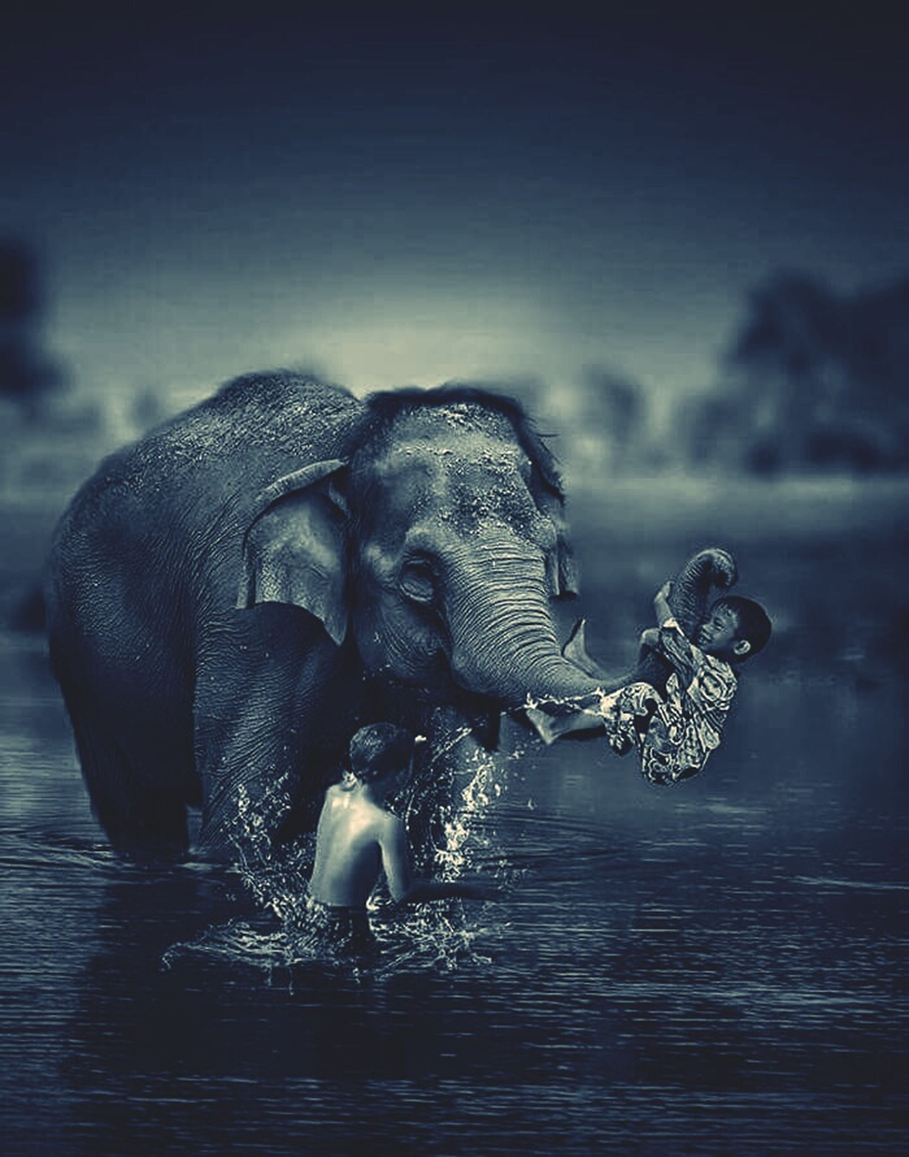 swimming pool, elephant, water, swimming, backgrounds, no people, nature, outdoors, day