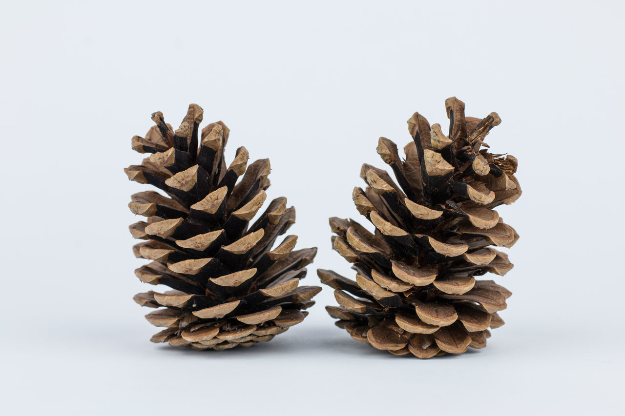 Pine Cone Pine Pine Art Pine Cone Pine Cone Art Pine Cones Pine Needles Pine Nuts Pine Trees Pinecone Pines Symetrical Showcase April Two Is Better Than One