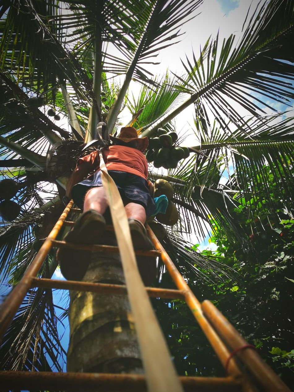 At Reach Low Angle View Nature Adult People Adults Only One Person One Man Only Sky Outdoors Coconut Coconut Trees Manual Worker Labor Of Love