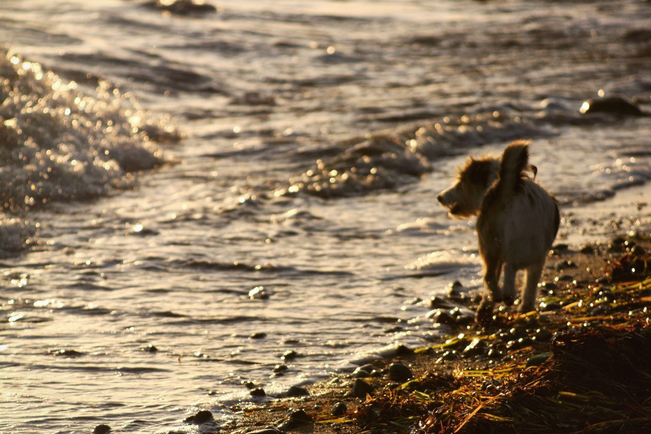 animal themes, domestic animals, one animal, mammal, no people, outdoors, nature, day, water, dog, pets