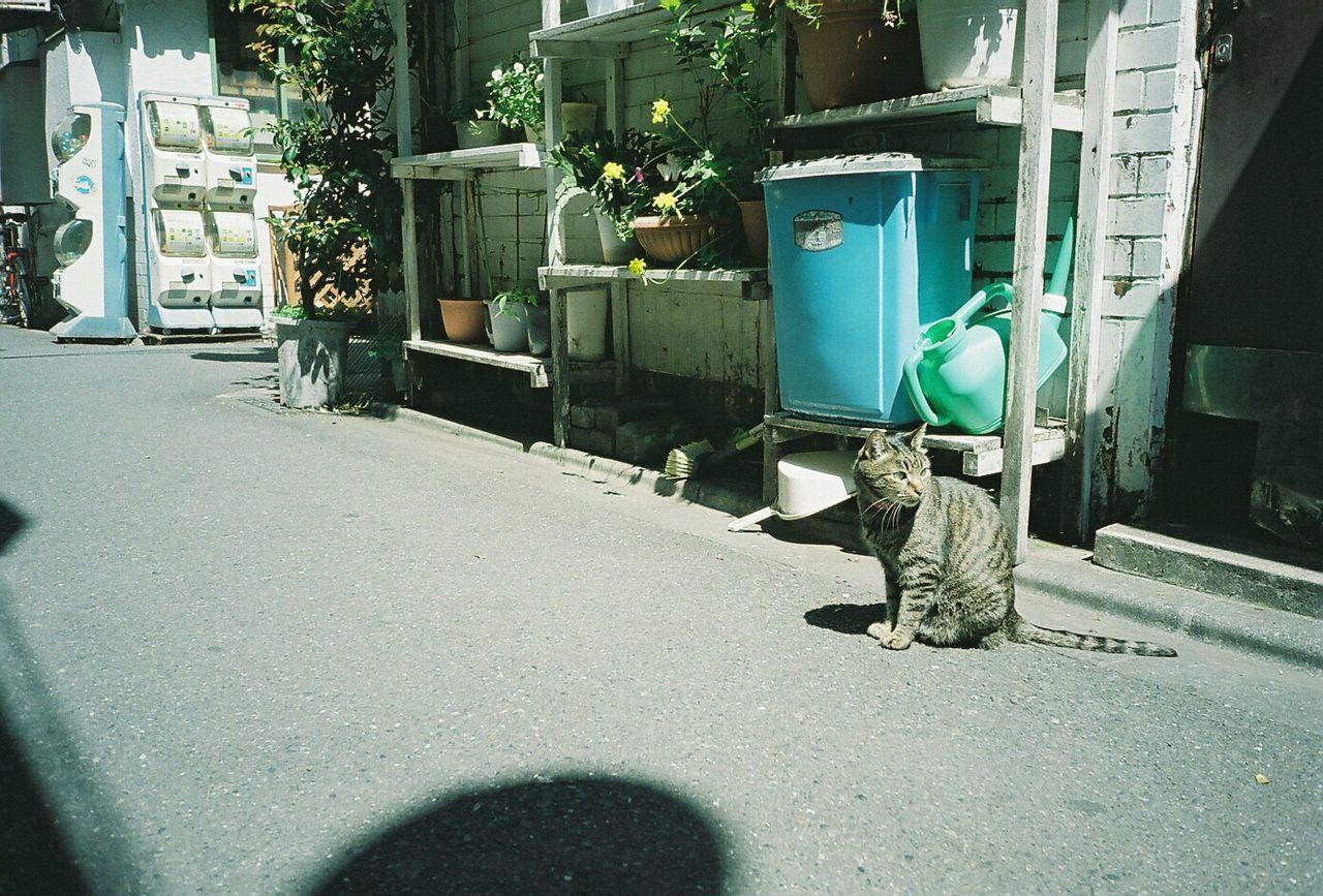 東京 新宿 ゴールデン街 猫 野良猫 のらねこ部 フィルム ふぃるむカメラ Cat Tokyo SHINJYUKU Fiim Filmcamera Film Photography Fujifilmpro400 Pro400