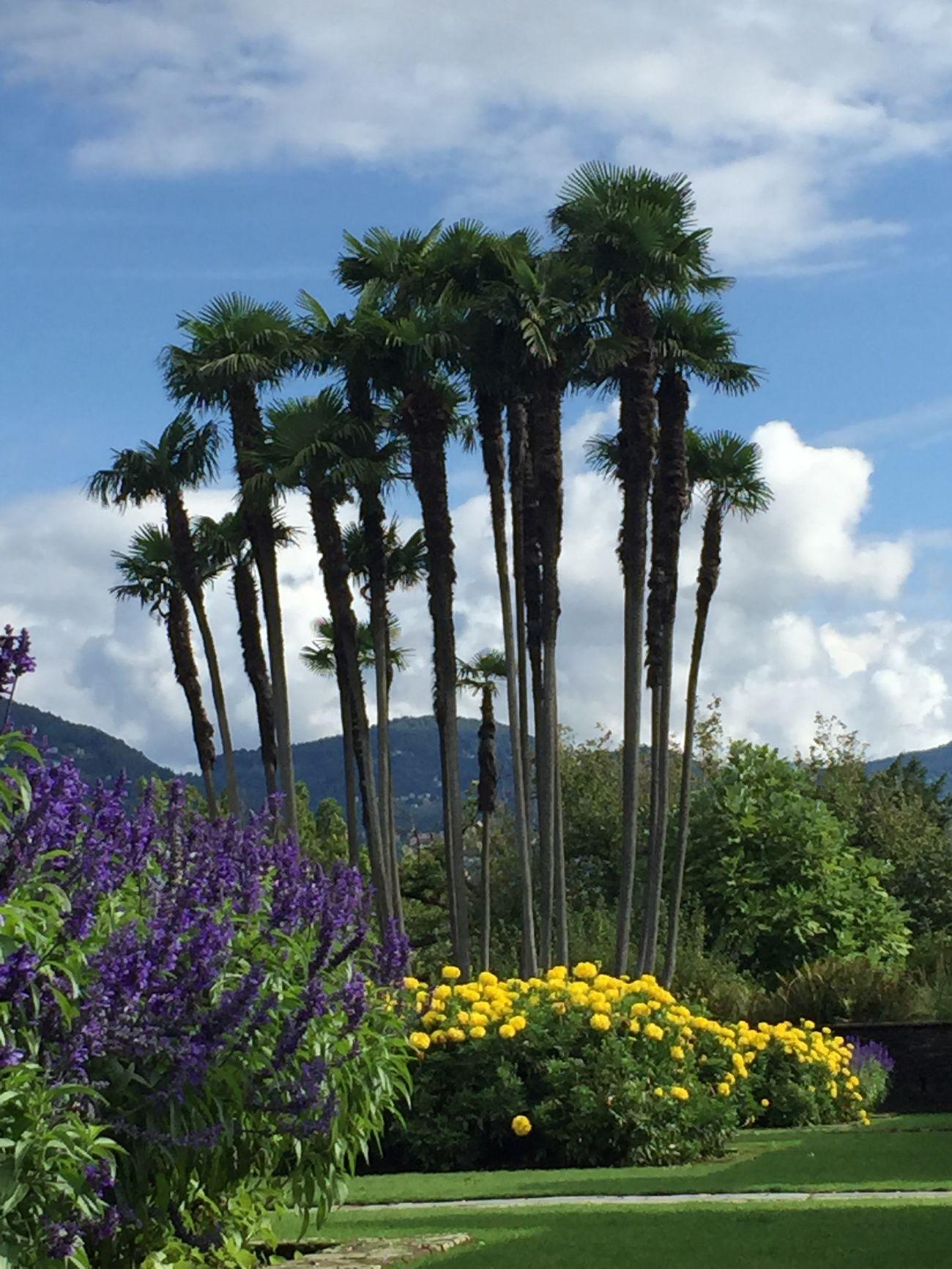 Good Morning Flowers buongiorno