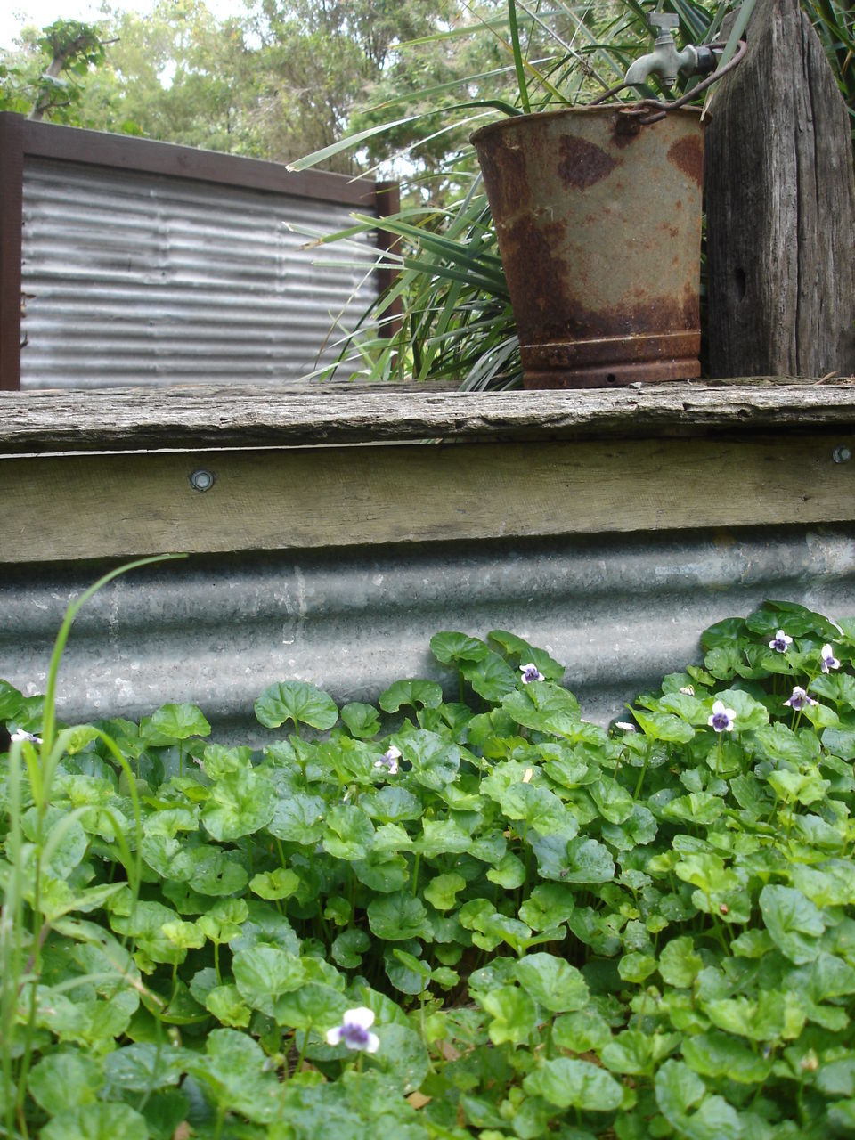 growth, plant, green color, day, leaf, outdoors, no people, nature, architecture, freshness, close-up