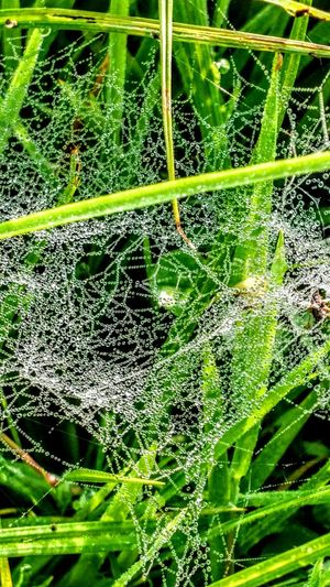 Wet Spidernet... Green Color Backgrounds Nature Plant Beauty In Nature Freshness GetbetterwithAlex Spidernet Wendland Grass Original Picture
