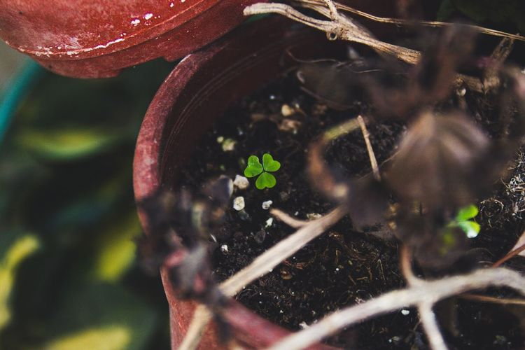Plant Growth Leaf Potted Plant Canon Trebol Clover