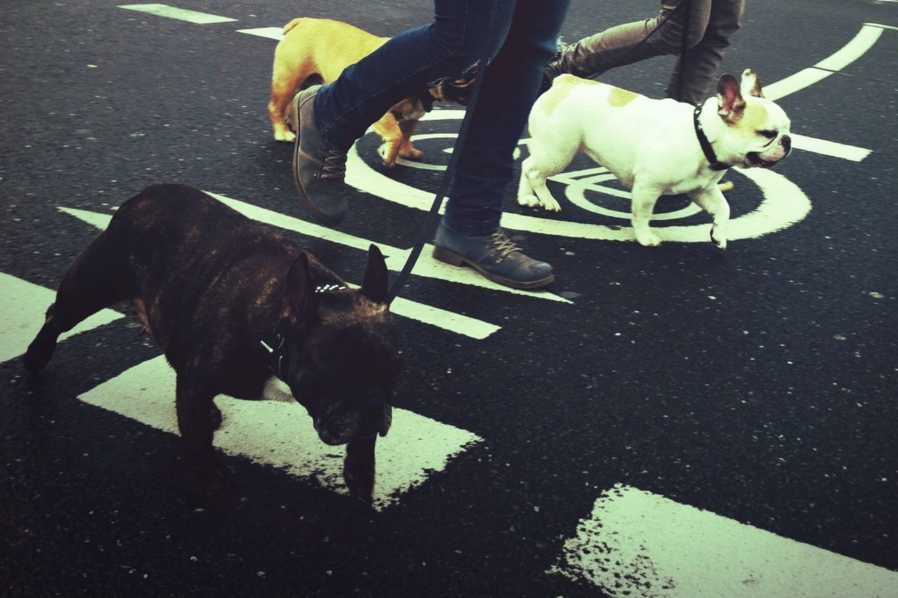 Low Section Of People With Dogs Walking On Street