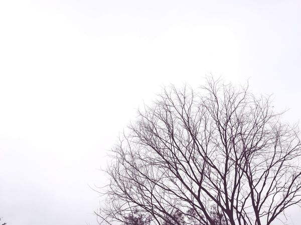 Tree Nature No People Sky Outdoors Day Beauty In Nature Branch Silhouette Black And White Black And White Photography Isolated White Background Isolated Photograph Black And White Friday