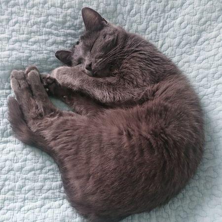 Miezemädels machen gerade beide Mittagsschläfchen, Wassi auf dem Sofa, Tshaga auf dem Bett 🐱 Tshaga_the_cat Schlafendetiere_tsez