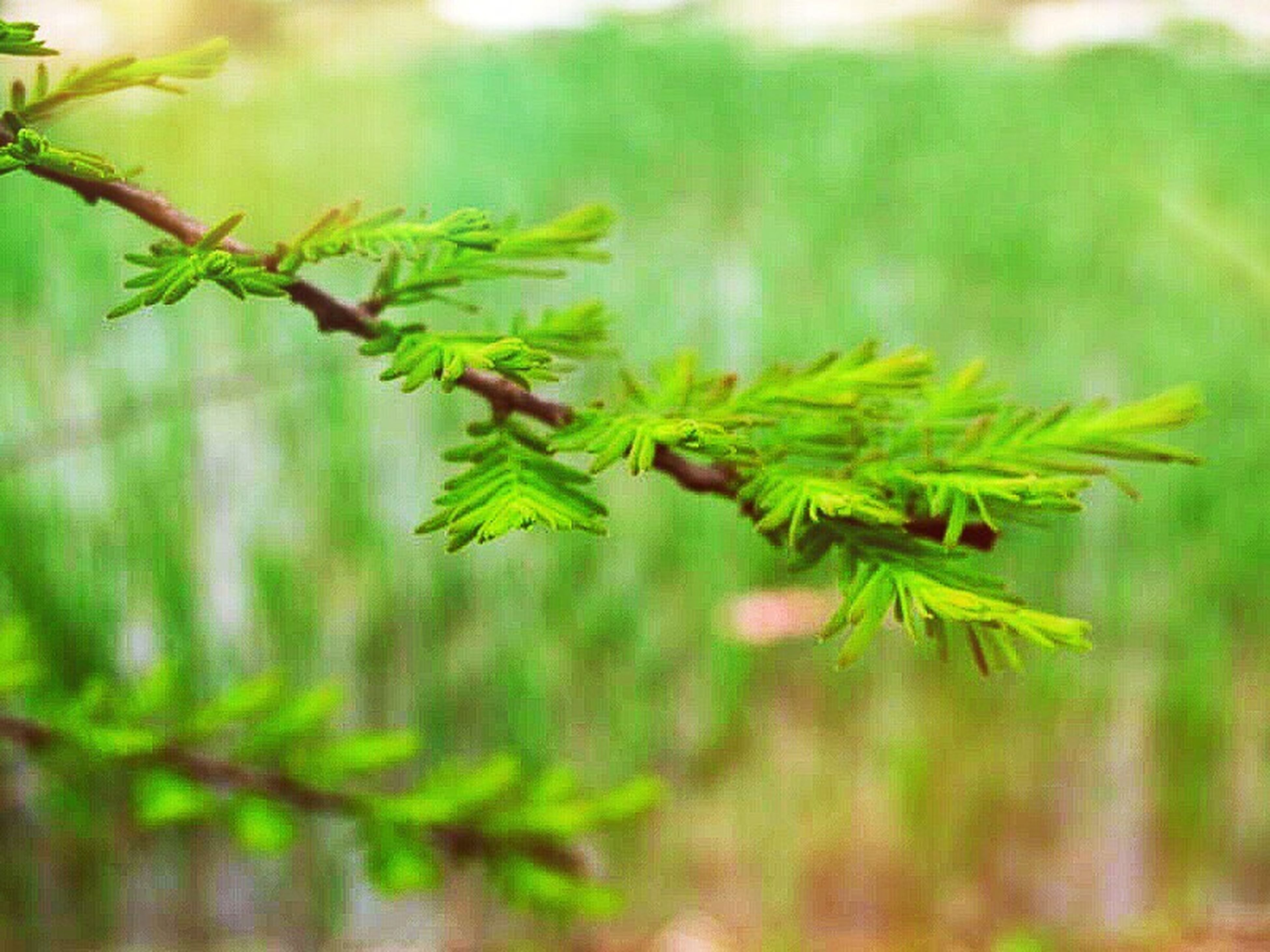 leaf, growth, green color, focus on foreground, plant, close-up, nature, selective focus, tranquility, beauty in nature, growing, leaves, stem, branch, botany, day, green, outdoors, freshness, no people