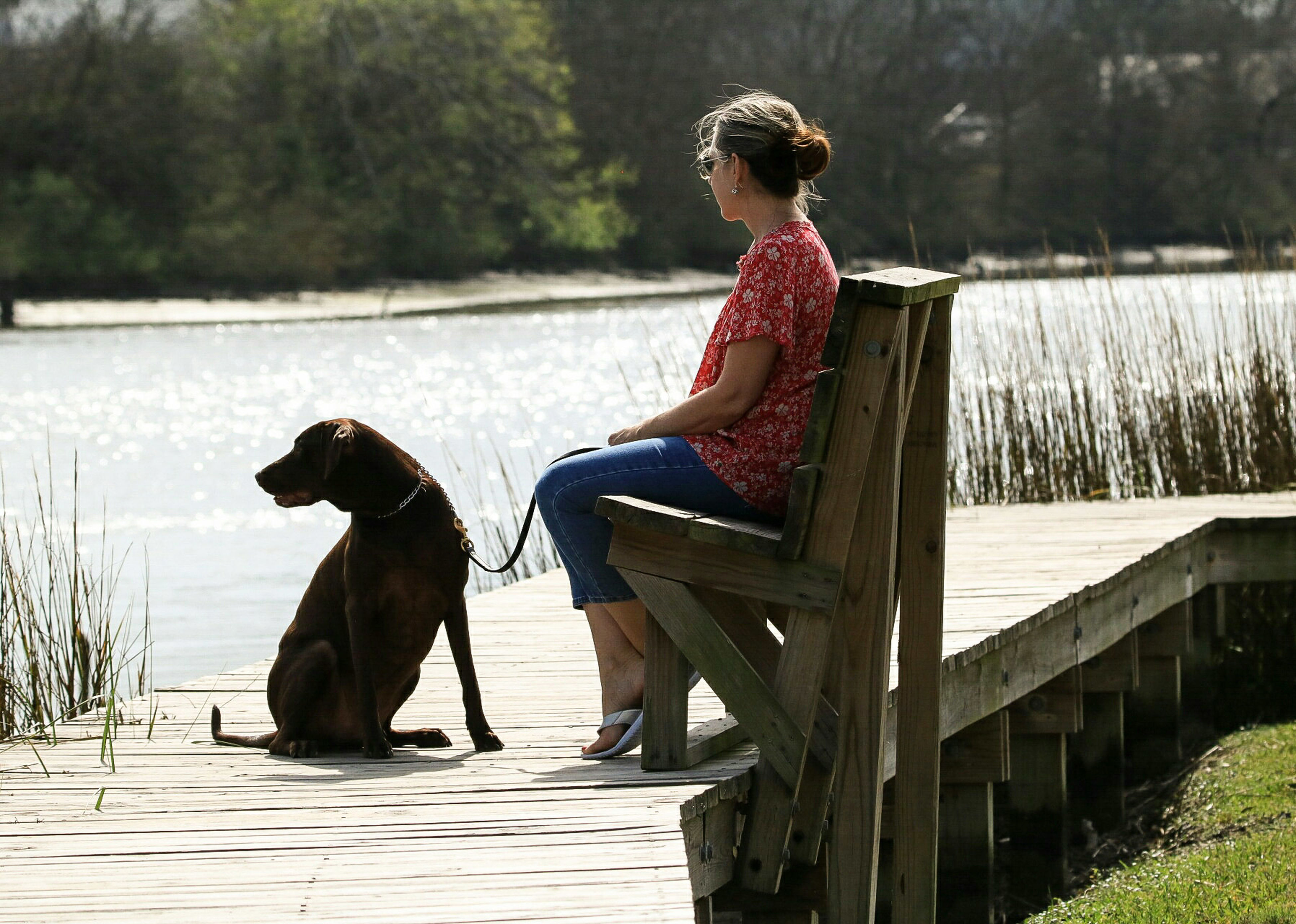 rear view, dog, one animal, pets, sitting, lake, water, animal themes, one woman only, one person, relaxation, people, outdoors, domestic animals, only women, day, leisure activity, adult, adults only, beach, nature, one young woman only, young adult, mammal