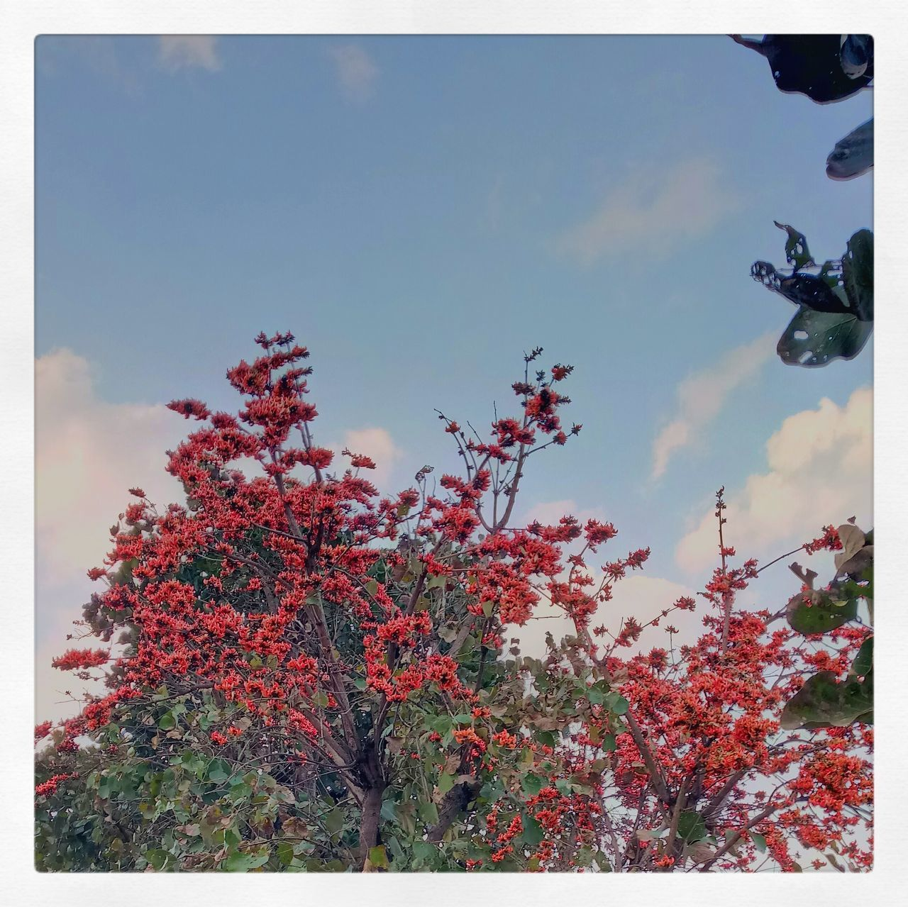 First. Nature Outdoors Beauty In Nature Sky Red Indiapictures Palash Leaf Jharkhand Picoftheday Growth Tree No People Low Angle View Day Plant Freshness Fragility First Eyeem Photo