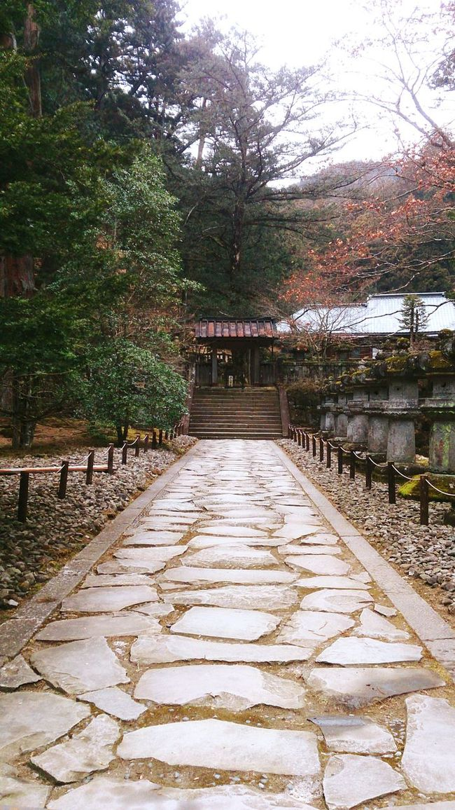 Nikkou Japan Nikko Temple Japon Nature Religion Relax Holy Budism Budismo Kamisama