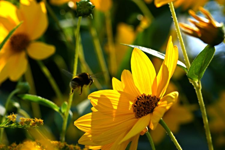 Enjoying Summer Hanging Out Hello World Relaxing Enjoying Life Naturelovers Life Is Beautiful bee Nature On The Door Step Nature_collection Nature Photography Light And Shadow