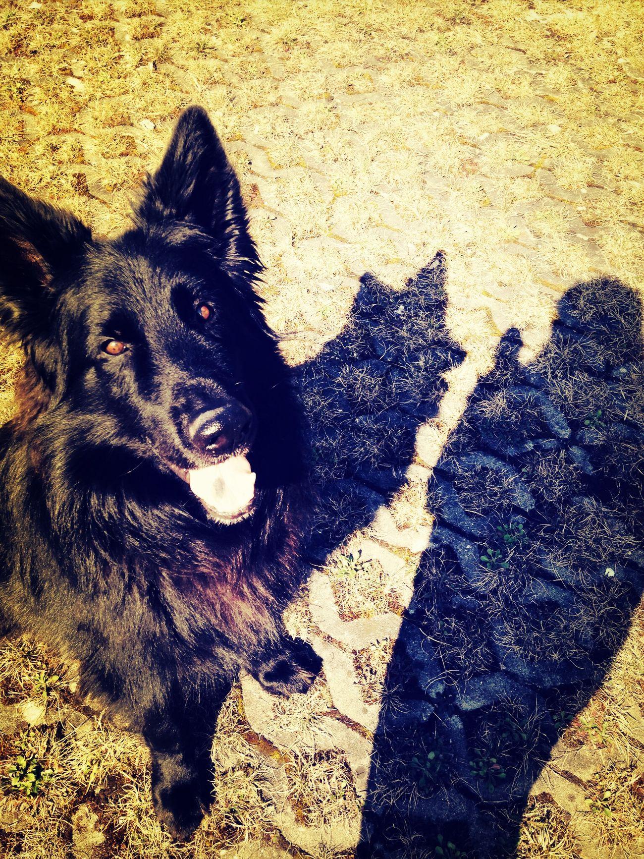 Dog, Love him best friend ((: Animal Portrait