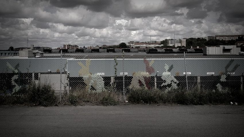 Found some bunnies today. What a nice surprise. Streetart