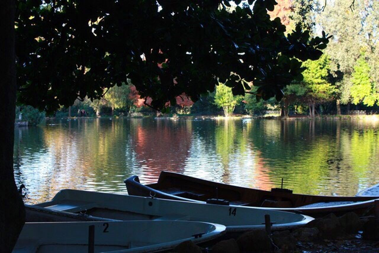 Tree Nautical Vessel Water Boat Transportation Lake Moored Tranquility Tranquil Scene Nature Day No People Scenics Beauty In Nature Villa Borghese Park Roma