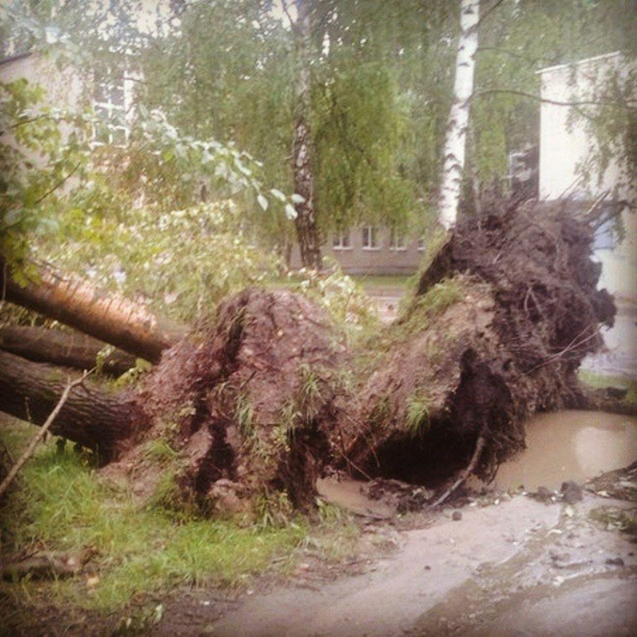 Территория Дашковской школы после урагана
