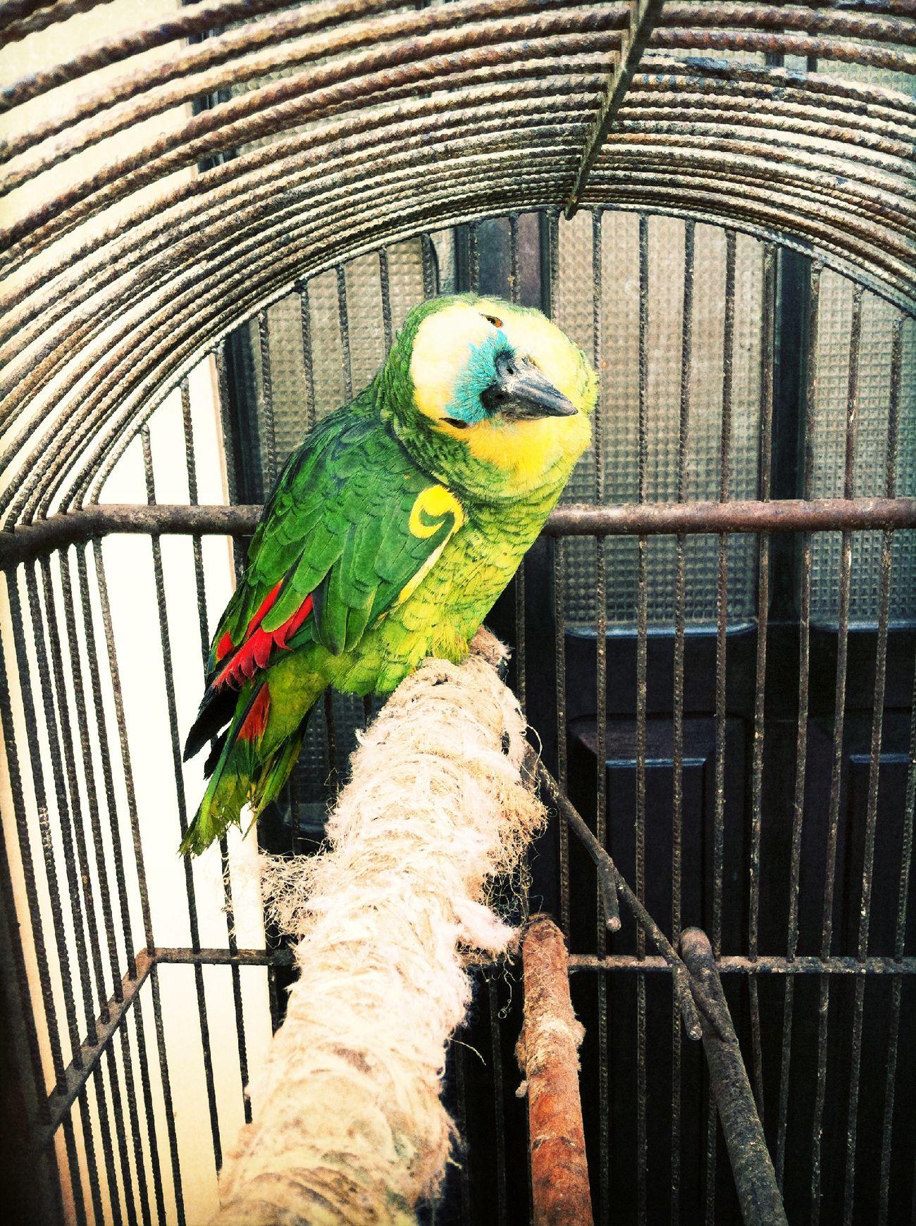 parrot at Plaza Zudañes Parrot