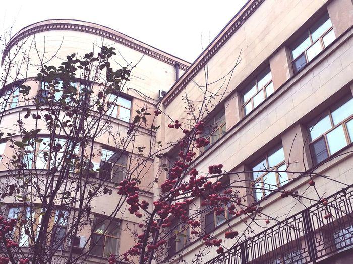 Яблоки в городе дом красные яблочки Apples Home конструктивизм архитектура АрхитектураМосквы