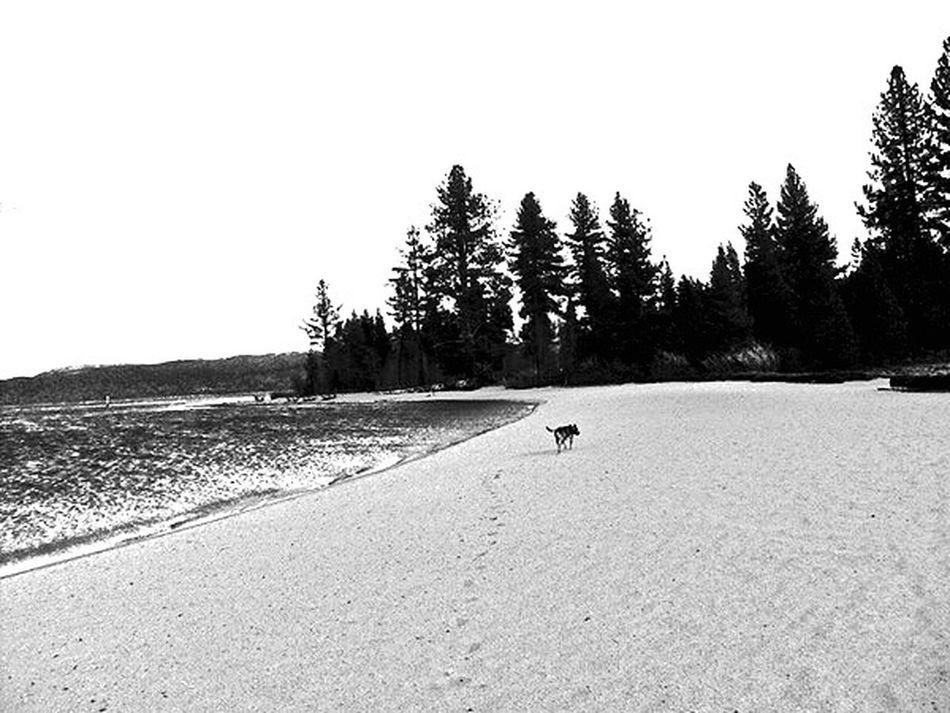 Dog Check This Out Hello World Taking Photos Taking Photos Lake Tahoe Landscape Hi! Best EyeEm Shot EyeEm Gallery Of My Heart ♥ Nobody Alone Soltitude Sad Wandering Wanderlust Solo