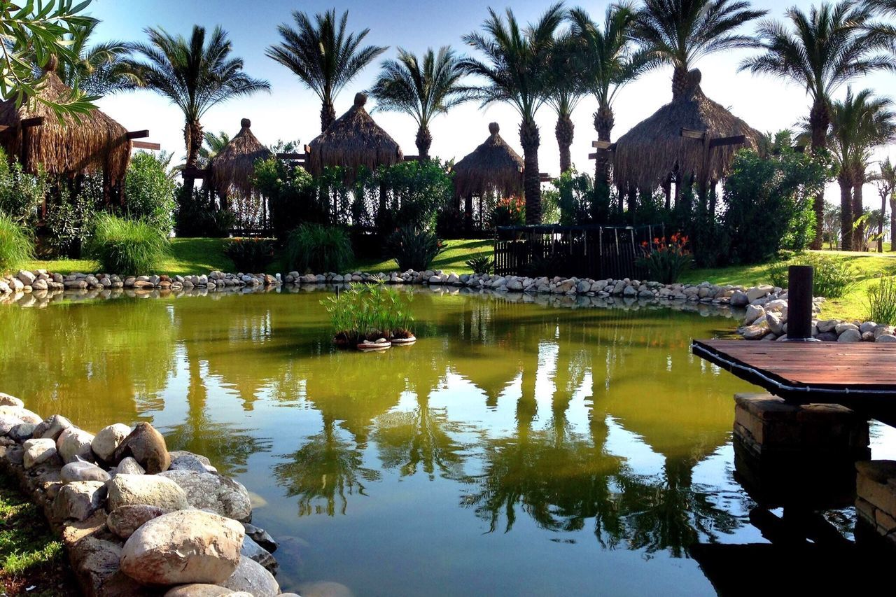 water, reflection, palm tree, tree, architecture, built structure, day, travel destinations, outdoors, swimming pool, nature, no people