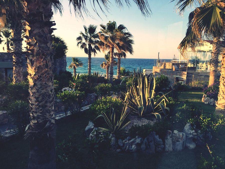 Sea Plant Beauty In Nature Palm Tree Water Beach Creta Crete Greece Holiday