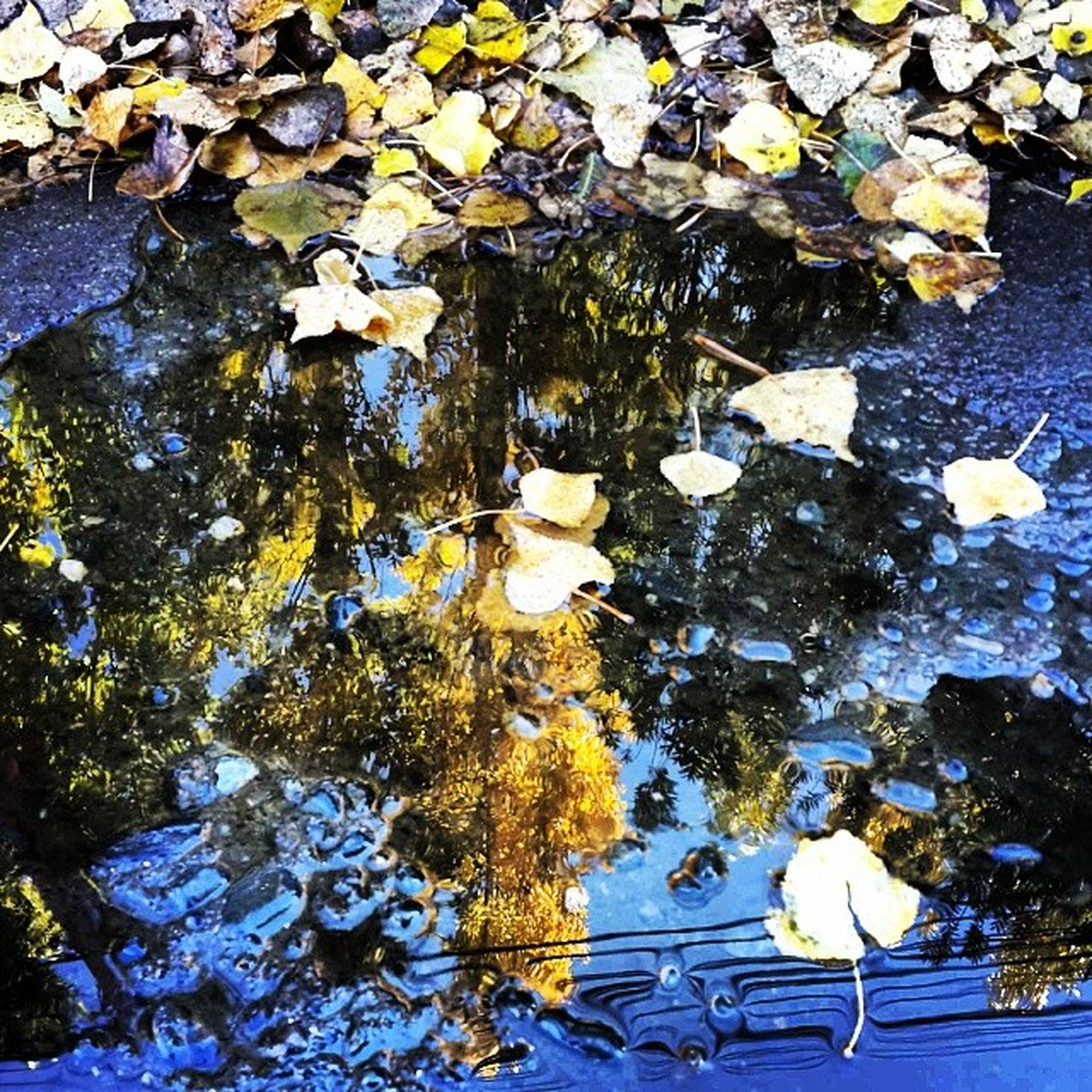 water, leaf, reflection, nature, high angle view, floating on water, beauty in nature, pond, growth, lake, flower, tranquility, white color, season, day, plant, outdoors, no people, fragility, waterfront