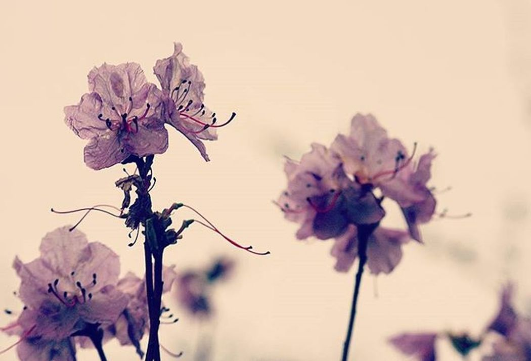 Nature Beauty Transparent Fragile Pinkandpretty Alnarp InTheGarden Garden Spring Enjoylife Picofthemoment Picoftheday