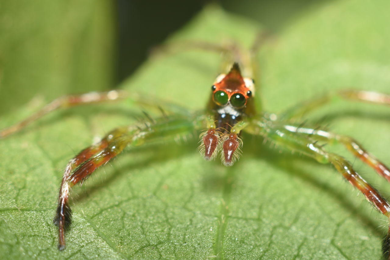 Animal Themes Animal Wildlife Animals In The Wild Close-up Day Green Spider Macro Photography Macro Spider Nature No People One Animal Outdoors Spider