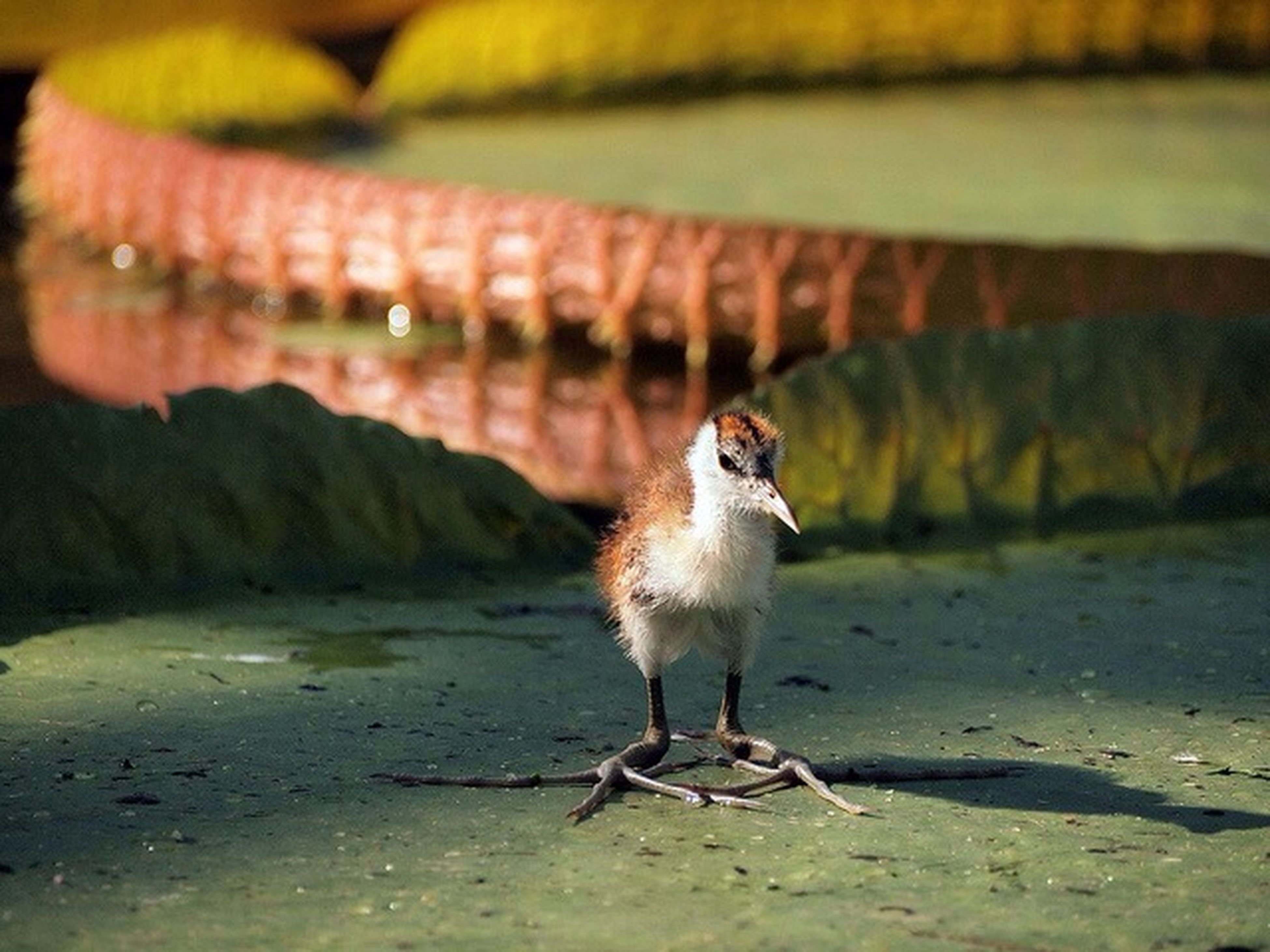 animal themes, one animal, bird, animals in the wild, wildlife, focus on foreground, full length, perching, close-up, outdoors, nature, side view, beak, day, looking away, selective focus, sunlight, no people, seagull, walking