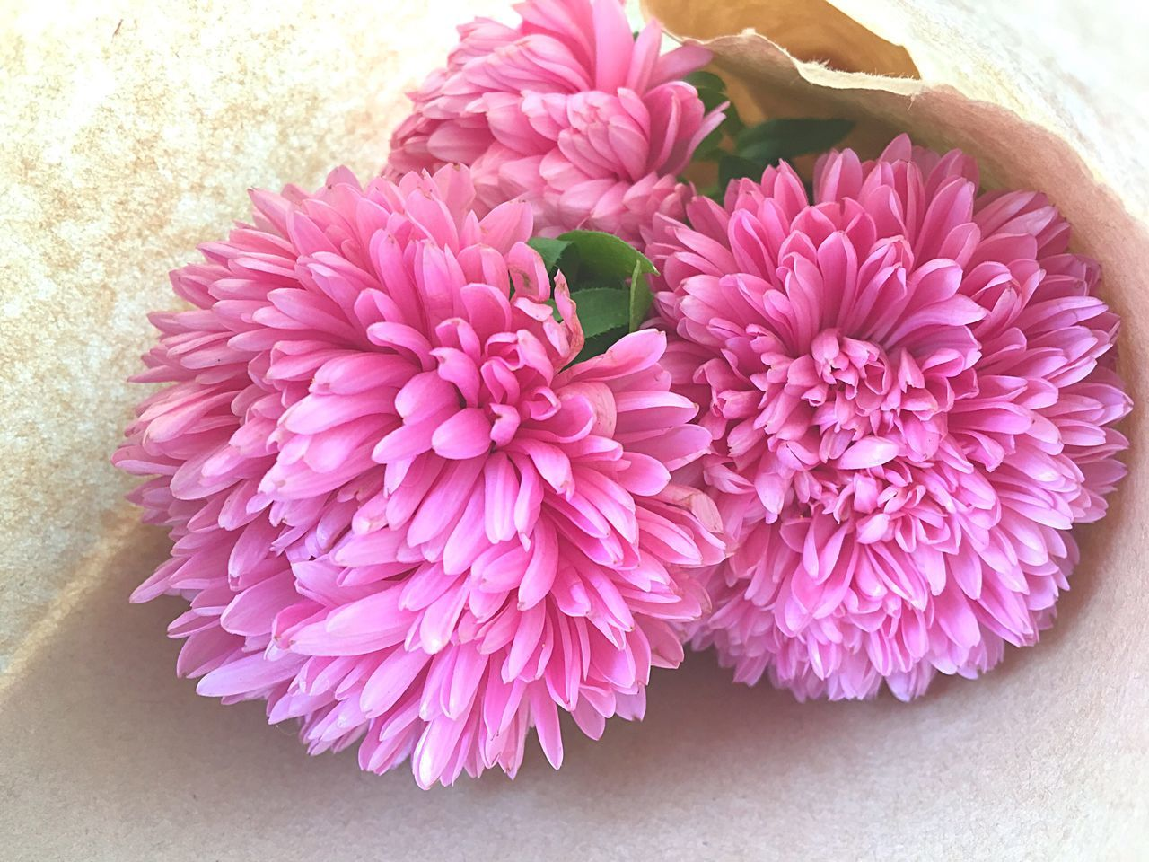 flower, petal, freshness, pink color, beauty in nature, no people, flower head, nature, arrangement, close-up, indoors, fragility, day