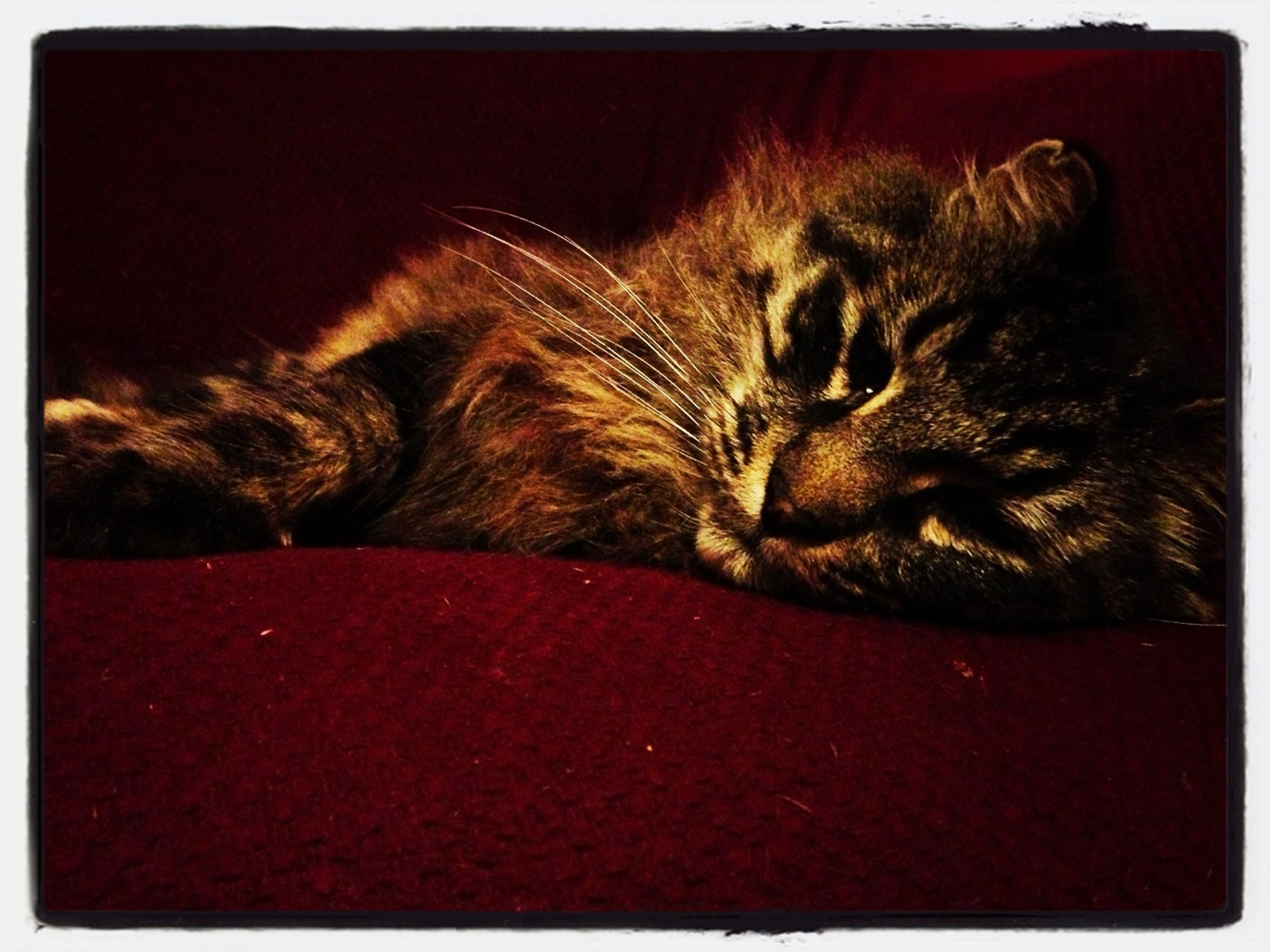 domestic cat, pets, animal themes, cat, one animal, domestic animals, mammal, feline, whisker, relaxation, sleeping, resting, transfer print, lying down, eyes closed, indoors, auto post production filter, close-up, animal head, tabby