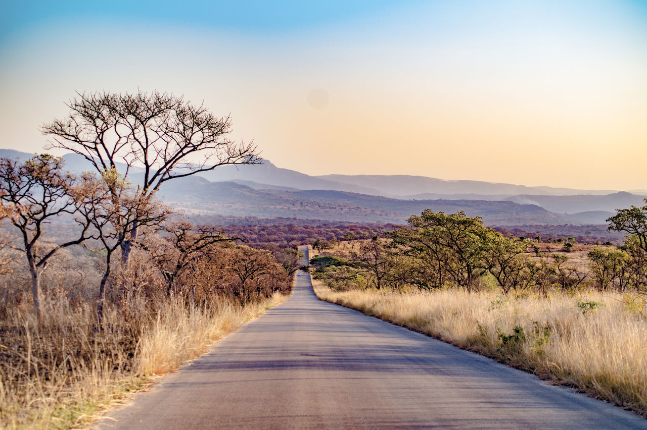 Africa Beauty In Nature Clear Sky Country Road Diminishing Perspective Grass Landscape Long Mountain Nature Road Scenics Sky The Way Forward Tranquil Scene Tranquility Tree Vanishing Point Car Safari Kruger Park