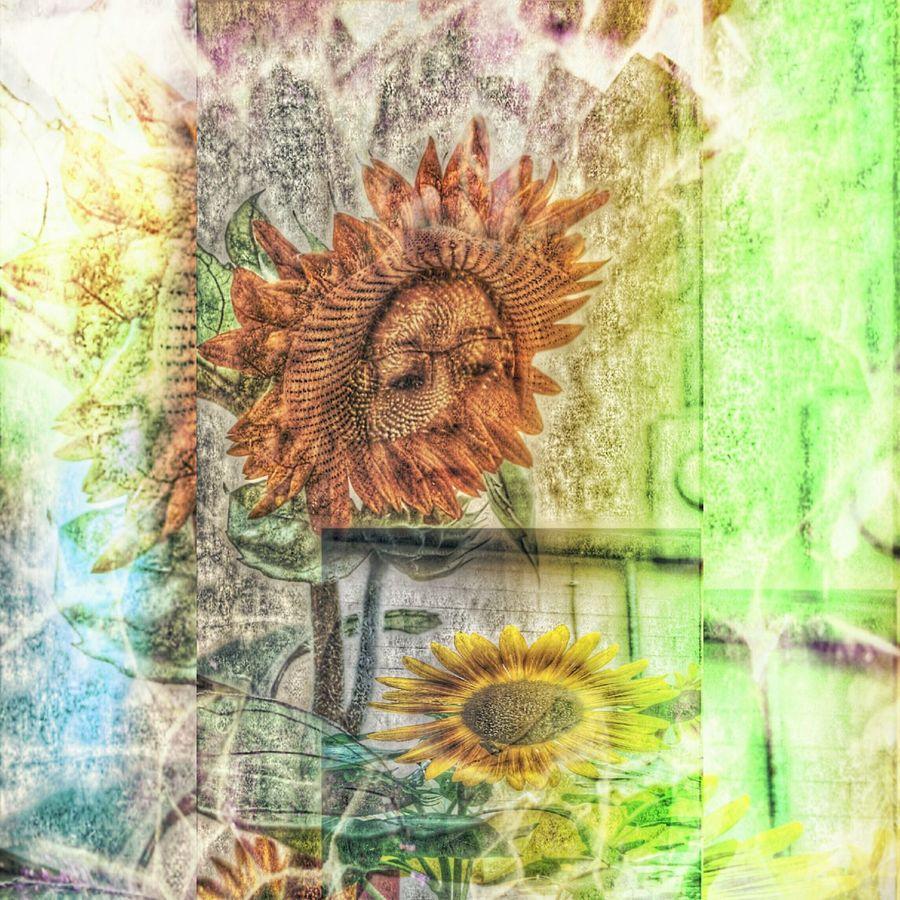 Fine Art Photography FinestofEyeEm Life In Color Petals Painteffect Theartofanimage Nature Flowers Sunflower Life Center Showcase July