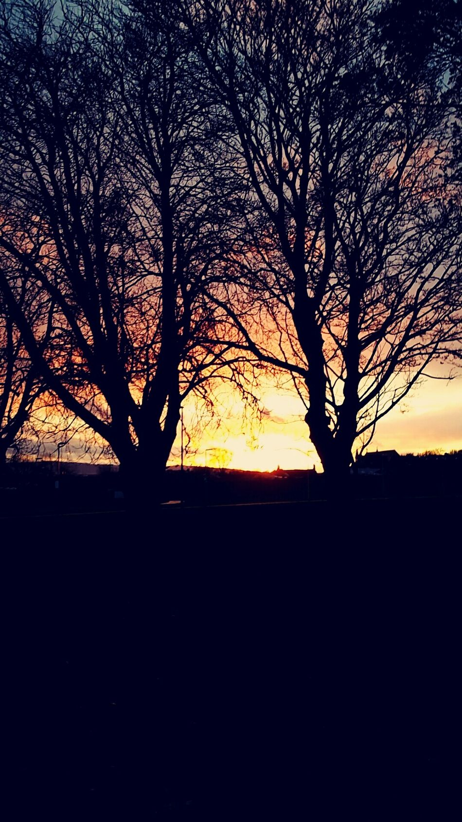 flaming sky Sunset Endoftheday Natural Beauty Beautifulcolddays Trees Contrast Coloursplash Campus Life The Nature Photographer - 2016 Eyeem Awards