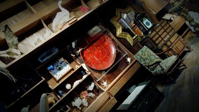 Art Room Collection Art And Craft Barroco Taxidermy Museum Of Art First Eyeem Photo