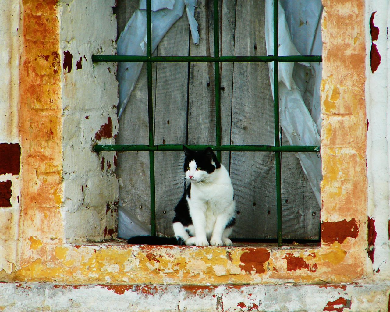 Domestic Animals Pets Animal Themes One Animal Domestic Cat No People Portrait Full Length Outdoors Day Feline Watching Travel Photography In The Window Looking Into A Window