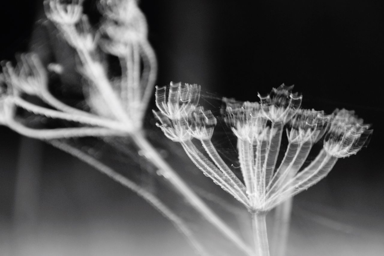 Monochrome Flower Playing With Pictures. 'Shaken Not Stirred' Minimalism