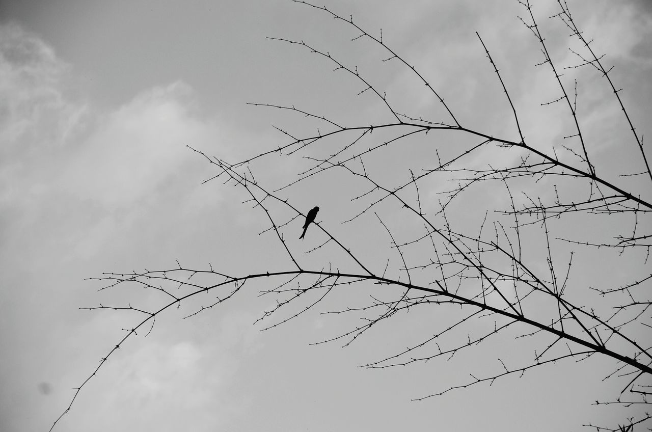 Bird on Twig Twigs Twigs And Branches Sillouette Blackandwhite Alone EyeEm Best Shots - Black + White Lonely Calm Beauty In Nature Nature From My Point Of View